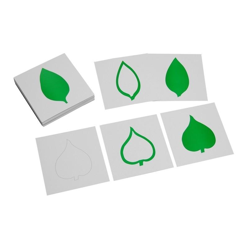 """cartes """"feuilles"""" pour cabinet botanique"""