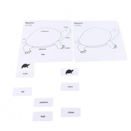 Cartes controle puzzle tortue en français