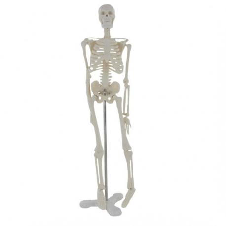Petit squelette.