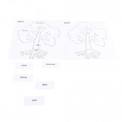 cartes pour cabinet de botanique