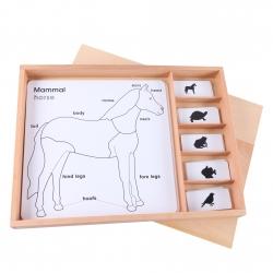 cartes pour cabinet de zoologie